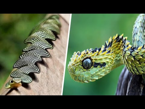 أندر الثعابين في العالم ... ستراها لاول مرة في حياتك  - نشر قبل 9 ساعة