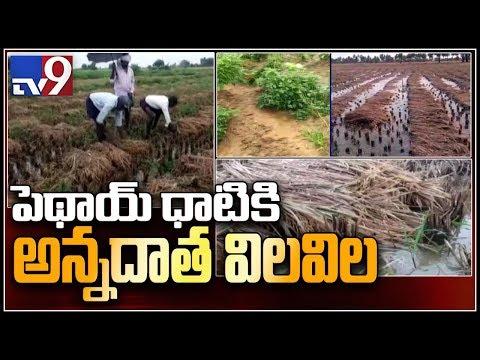 Fear of crop loss in Phethai effect grips farmers - TV9