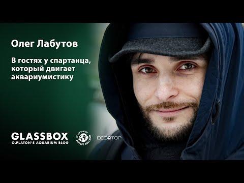 Видео: Олег Лабутов о Decotop, BADC, Биотопных аквариумах