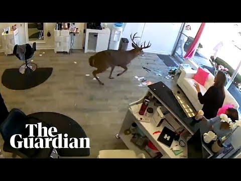 Deer smashes through window of Long Island hair salon