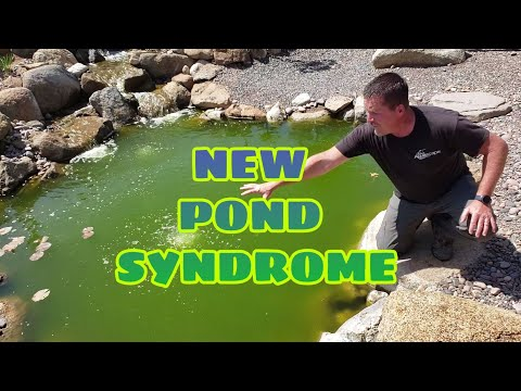 NEW POND SYNDROME - Algae Bloom Solutions | Say NO! To Green Pond Water!!