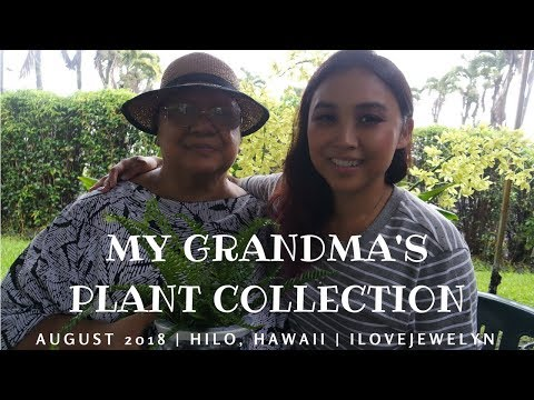 My Grandma's Plant Collection: HAWAII edition | August 2018 | ILOVEJEWELYN
