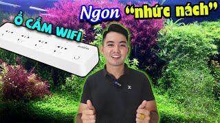 Thủy sinh nhẹ nhàng hơn với Ổ Cắm Điện Hẹn Giờ Wifi - Góc Thủy Sinh