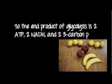 Glycolysis Made Easy.m4v