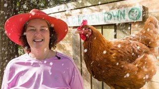 Winterizing your chicken coop: keeping chickens in winter