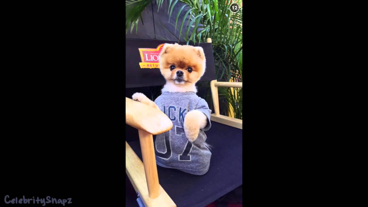 Jiff The Dog November 14th 2015 Full Snapchat Story