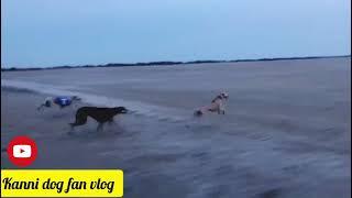 ஒரு சின்ன முயற்சி , விரையில் நெடுந்தூர ஓட்டம் |Kanni Dog Race |