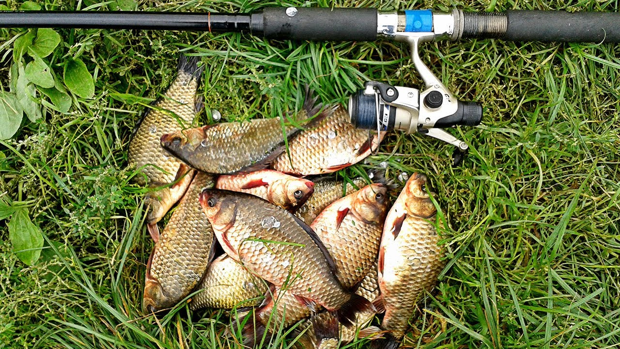 Рыбалка в мае карп и карась