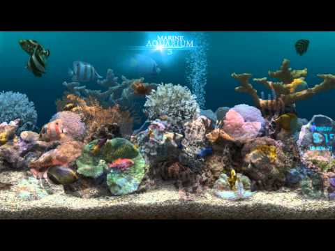 Android 3d Live Wallpaper Tutorial Full Download Living Marine Aquarium 2 Screensaver