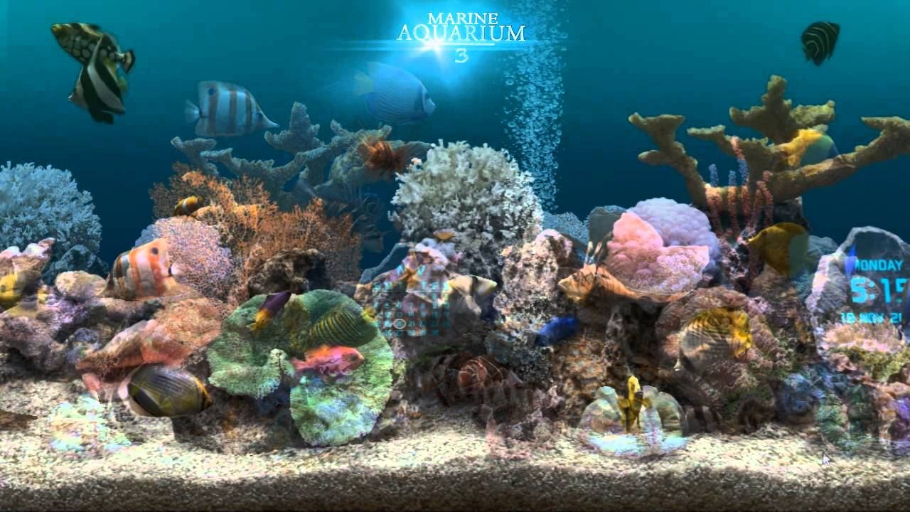 3d Animated Wallpapers And Screensavers Full Version Free Download Marine Aquarium 3 2 For Android Youtube