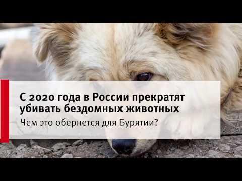 Чем обернется для Бурятии закон, запретивший убийства животных?