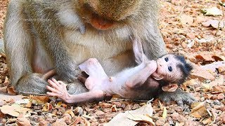 Wow! So Cute Little Pretty Girl Baby Monkey! Very Lovely New Baby Take Care Baby Leyla