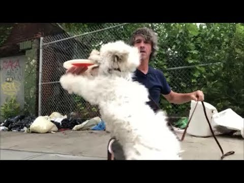 how to train a dog to play frisbee