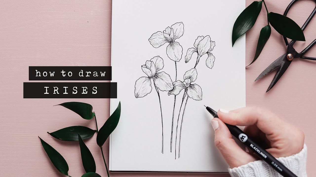 How To Draw An Iris Flower   Floral Illustration