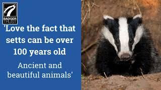 #LoveBadgers National Badger Day