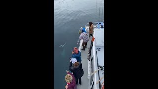 Orca Calf Went Right up to a Boat to Check It Out