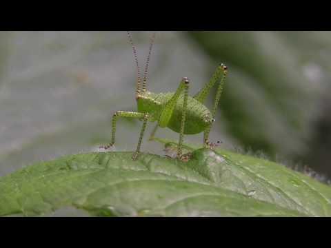 Du kleiner grüner Wicht!