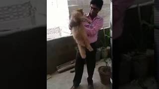 Luxury cat at home by hafiz shakeel
