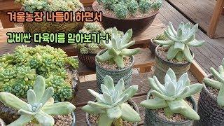 겨울농장 나들이와 값나가는 다육이름 알아보기~!!Succulents name