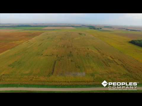 Upcoming Palo Alto, Iowa Land Auction - Peoples Company #13688 - 80 Acres M/L