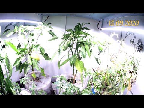 Выращивание растений при искусственном освещении ВИДЕО 1. Обзор растений и светильников m23.ru