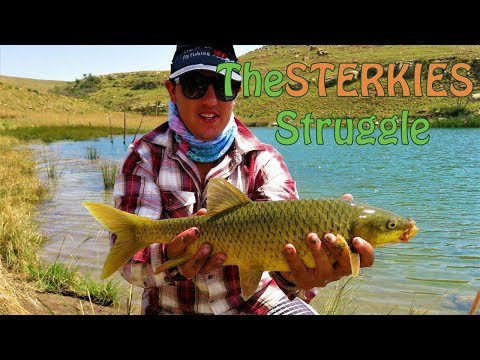 The Sterkies Struggle | Sterkfontein Dam Fly Fishing For Yellowfish | Fish The Fly