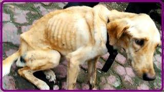 【衝撃】深い穴に捨てられた上、蓋を置かれ閉じ込められた犬。1ヶ月後に保護された時にはほぼ手遅れの状態だった…【世界が感動!涙と感動エピソード】