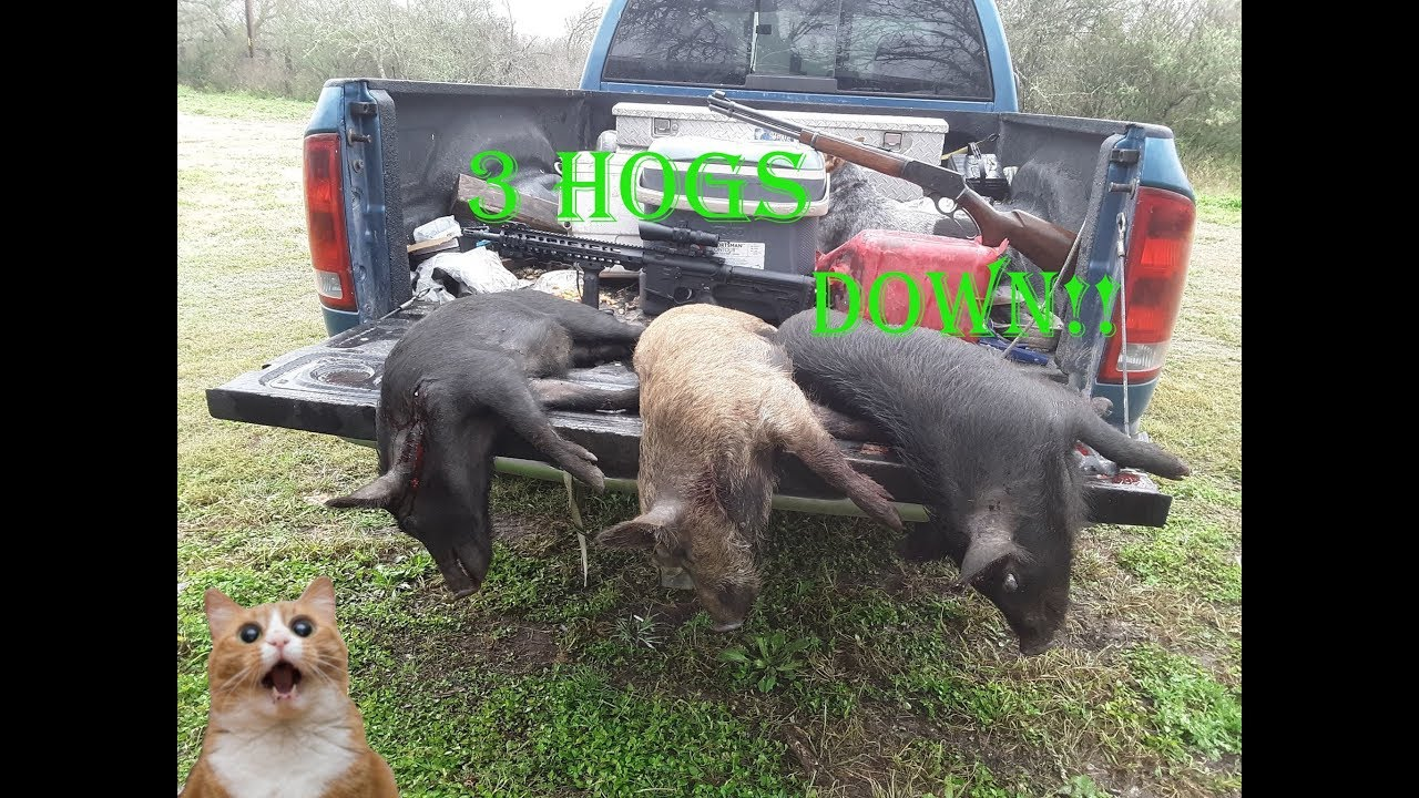 Bringing Home the Bacon! Wild Hog kill and processing!