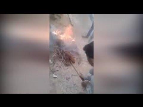 Hyderabad boys burn 3 puppies alive, post video on Facebook