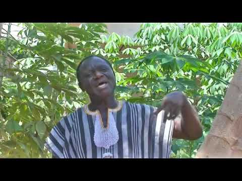 Ali Bawa - Cultivateur