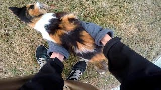 bikers are nice   bikers helping people   animals   compilation 2018  ep  14