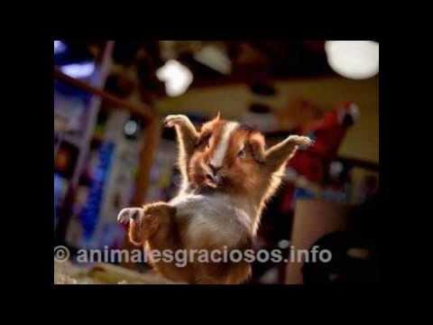the hamsterdance (audio original)