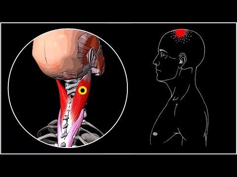 ременная мышца шеи