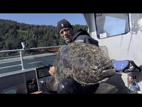 Holy Halibut! Jeremy Wade Reels in Monster Alaskan Killer