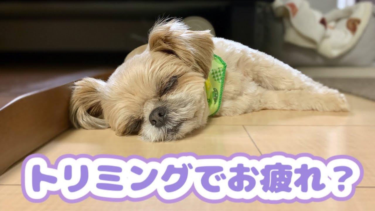 落ち着か ない 犬