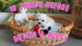 10 TIPS BEFORE BUYING A PUPPY