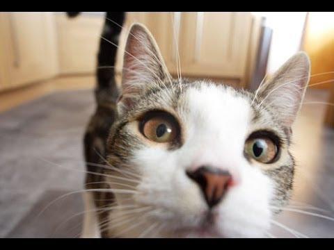 Funny Videos | Funny Cats | Funny Animals | Epic