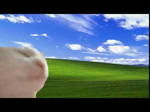 Cat Vibing in Windows XP