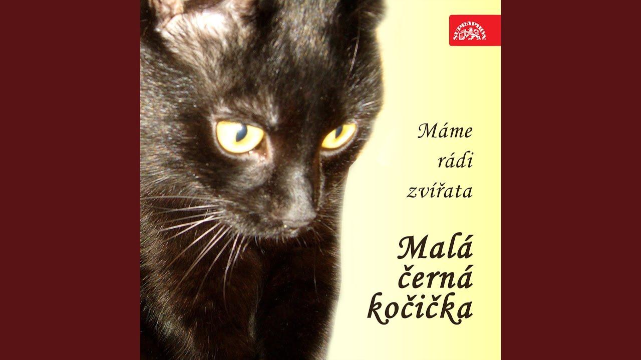 Tory černá kočička