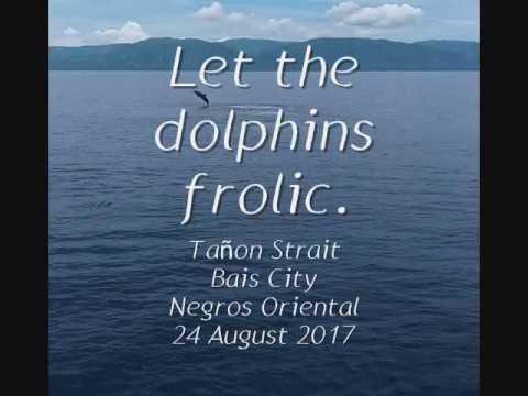 Dolphin-watching at Tañon Strait, Bais, Negros Oriental