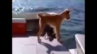 كلب سقط من سفينة في البحر في منطقة القروش انظر ماذا حدث له