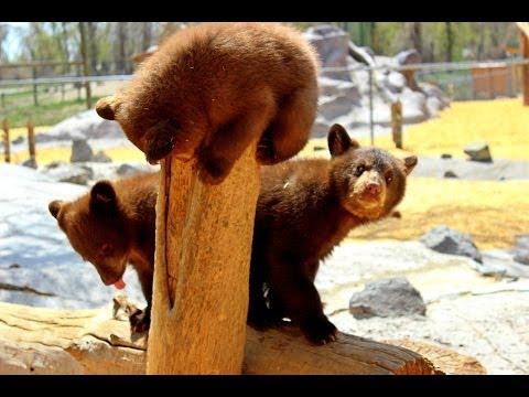 Yellowstone Bear World in Rexburg,Idaho(A day in my Life:)
