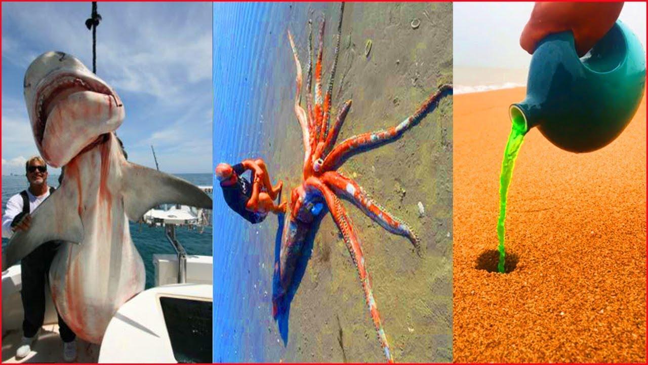 Catching Seafood 🦀🐙 ASMR Relaxing (Catch Shark , Catch Fish ,Deep Sea Monster ) - Tik Tok #186