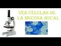 EXPERIMENTOS DE BIOLOGÍA: Ver las células de la mucosa bucal al microscopio