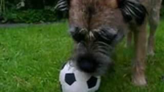 Border Terrier & Football Crazy Designer Dog Toy