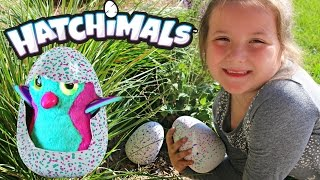 Hatchimals Eggs Found In The Wild! Our Hatchimals Eggs Finally Hatch Open! See What We Got! thumbnail
