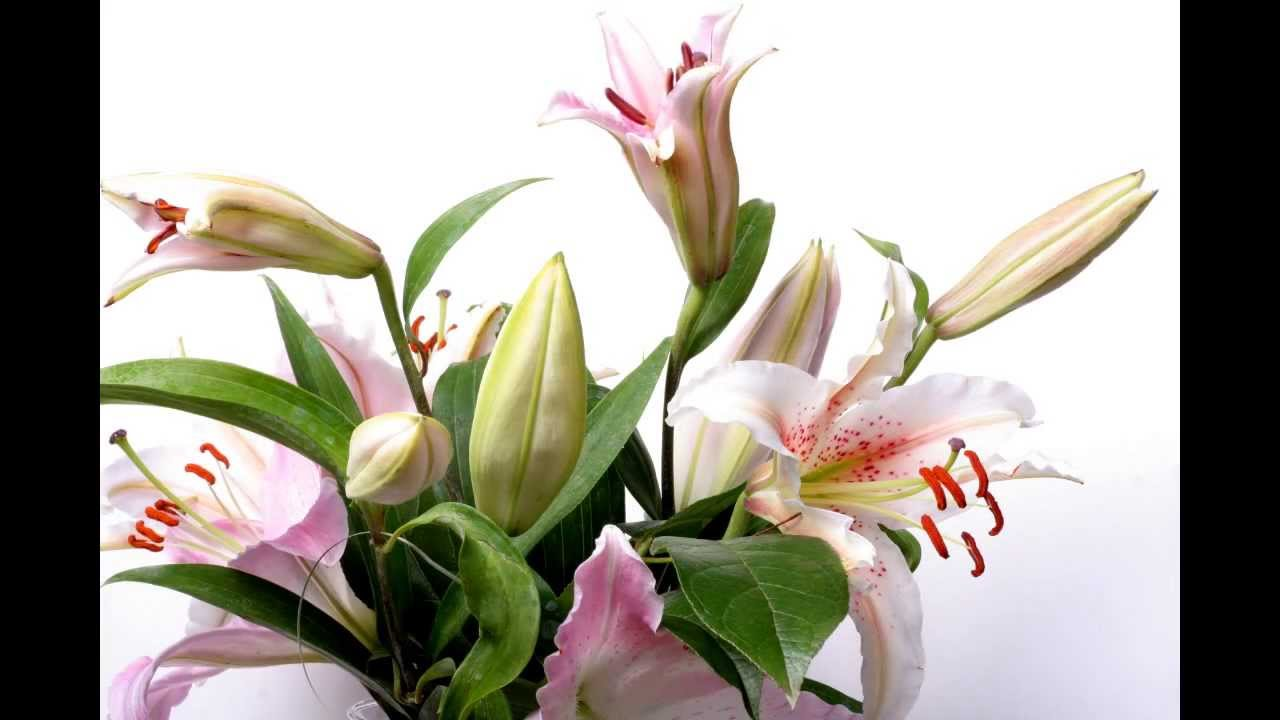 Lily flower time lapse youtube lily flower time lapse izmirmasajfo