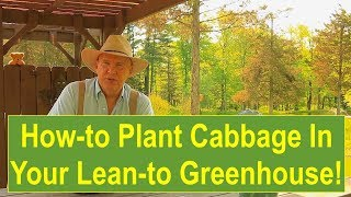 Tips and Ideas on How-to Plant Cabbage in Your Lean-to Greenhouse