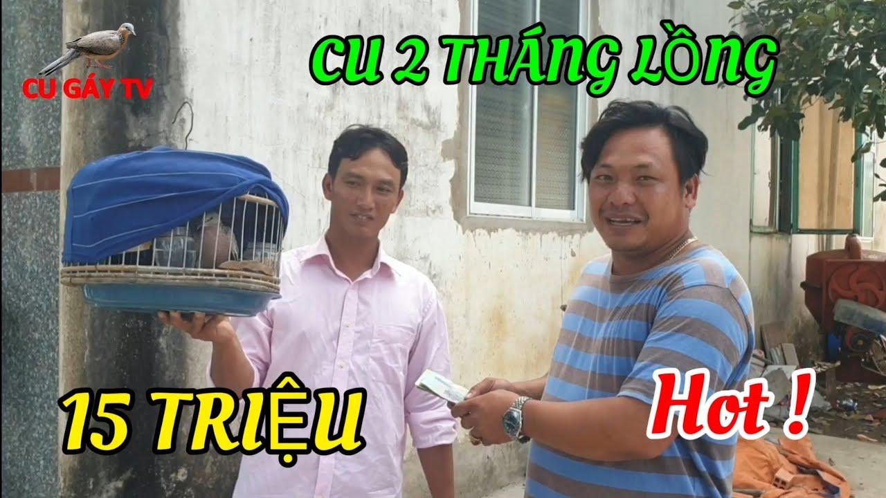 Chim Cu 2 Tháng Lồng Thành Mồi | Anh Nhân Chia Lại 15 Triệu .