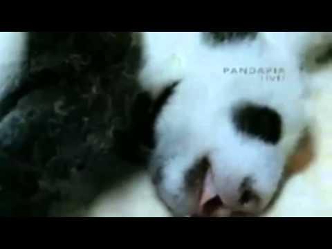 Panda Nursery[7]6.09.14